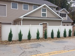 Arborvitae Trees from Affordable Landscaping Supplies